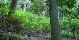 after bush regeneration western sydney